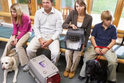 Ein Tierarztbesuch ist immer sinnvoll.