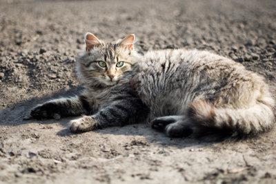 Nur vertreiben hilft gegen Katzenkot.