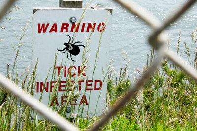 Zecken übertragen Krankheiten.