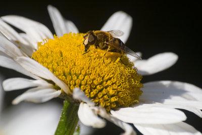 Wespenstiche kann man gut behandeln.