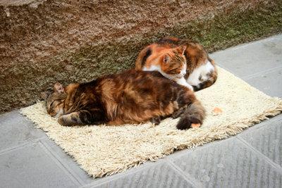 Katzen schließen feste Freundschaften.