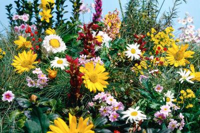 Eine Blumenwiese anzulegen erfordert Geduld.