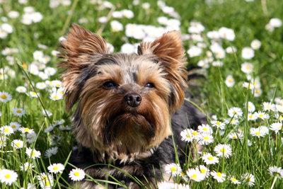 Einige Pflanzen können Hunde vertreiben.