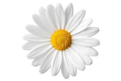 Blumen kann man im Juli pflanzen.