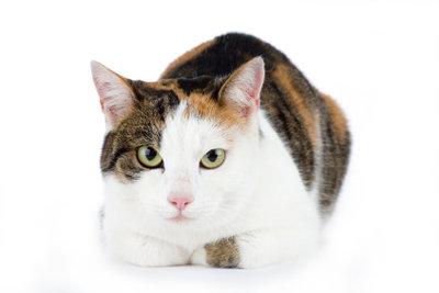 Auch Katzen haben nur ein Leben.