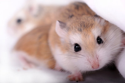 Ein Laufrad erfreut jeden Hamster.