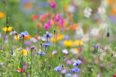 Eine Blumenwiese ist ein Traum.