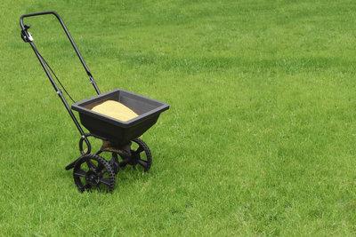 Düngen Sie den Rasen erst nach einer Bodenanalyse, da zu viel Dünger schadet.