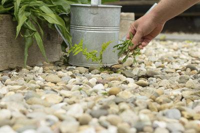 Entfernen Sie junge Unkrautpflanzen möglichst früh.