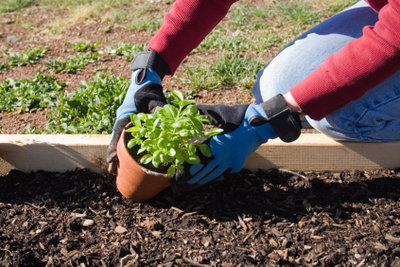 Gute Komposterde garantiert kräftiges, gesundes Pflanzenwachstum.