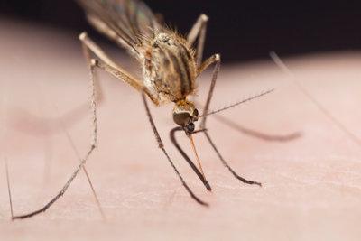 Mücken können Sie ohne Chemiekeule loswerden.