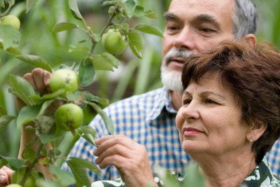 Ein Apfelbaum gehört in jeden Garten.