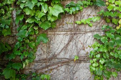 Stabile Mauern dank Schalsteinen.