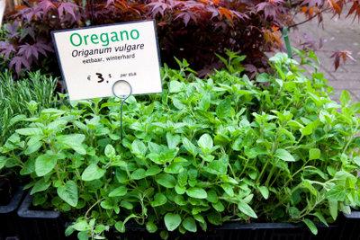 Kaufen Sie Oregano als Pflanze.