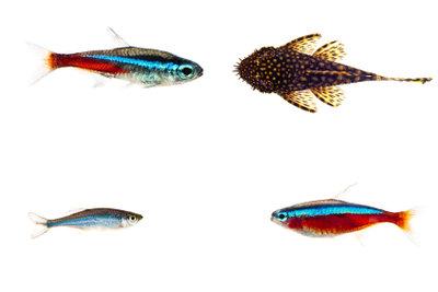 Durch Lochgestein fühlen sich die Fische wohler.