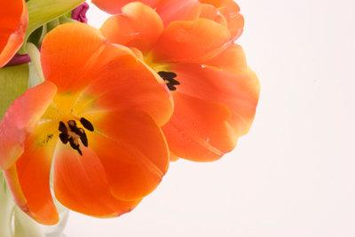 Blumen sind ein wunderschönes Malmotiv.