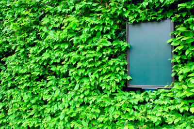 Kletterpflanzen begrünen Häuser und Wohnungen.