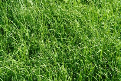 Ein schöner Rasen benötigt viel Pflege.