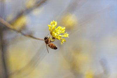 Ein Bienenbaum lockt effektiv Insekten an.