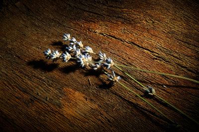 Die Blüten sollten papierflach sein.