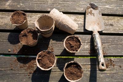 Kompost ist eine nahrhafte Blumenerde.