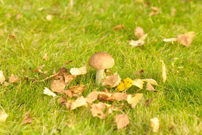 Erfolgreich Pilze sammeln gehen!