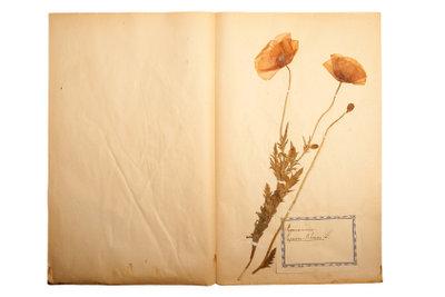 Das Anlegen eines Herbariums macht Spaß.