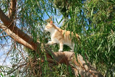 Katzendreck im Garten ist gesundheitlich bedenklich.