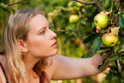 So bleibt Ihr Obst genießbar.