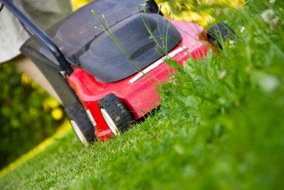 Eine regelmäßiger Rasenschnitt beugt Grasmilben vor.