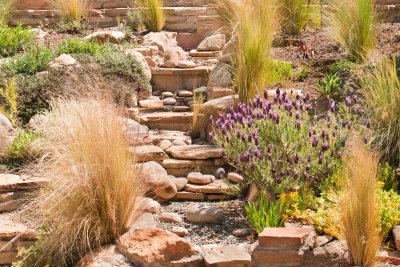 Steingartenpflanzen sind sehr pflegeleicht.