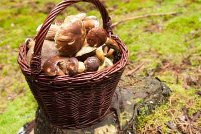 Pilze sind die Hauptzutat der Rahm-Soße.