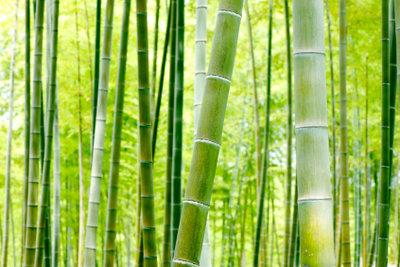 Düngen Sie Bambus richtig.