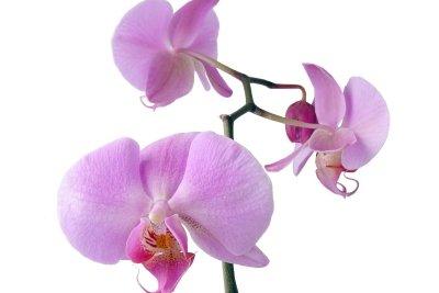 Orchideen sind beliebte Zimmerpflanzen.