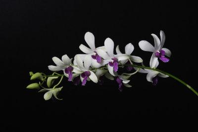 Orchideen kann man im Glas ziehen.