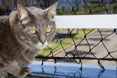 Ein Katzennetz für den Balkon ist ein Muss.