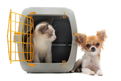 Kleine Hunde reisen im Passagierraum.
