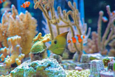 Aquarien können Sie aus Plexiglas bauen.