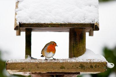 Wintervogelfütterung ist Tierschutz.