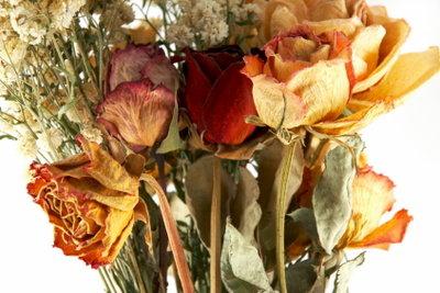 Trockene Blumensträuße sind unvergänglich.