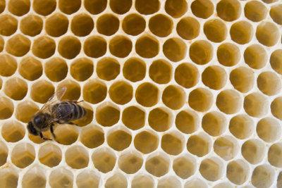 Ein Bienenstock braucht viel Platz.