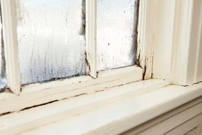 Schimmel bildet sich oft am Fenster.
