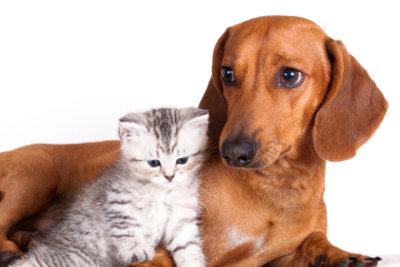 Flohbekämpfung - damit Ihr Tier sich wohlfühlt.