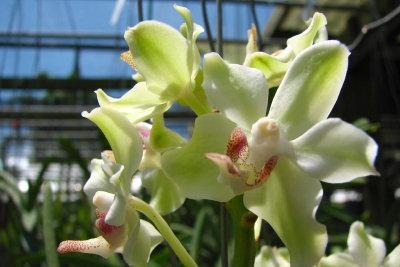 Orchideen bezaubern durch Farb- und Formenvielfalt.