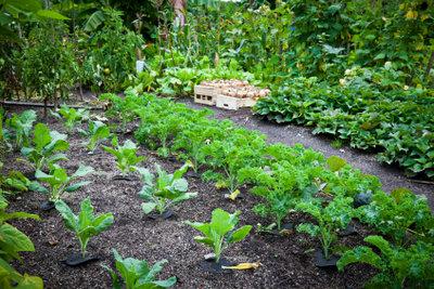 Grüne Gemüse enthalten viel Magnesium.