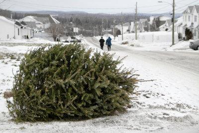 Kein Weihnachten ohne Tannenbaum