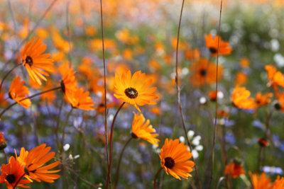 Einen Garten kann man pflegeleicht gestalten.