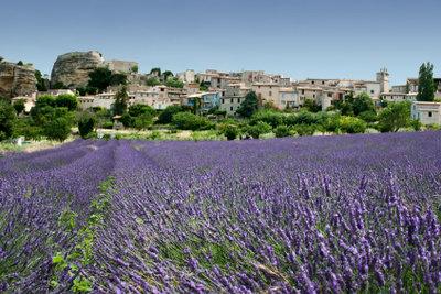 Lavendel ist eine Heilpflanze.