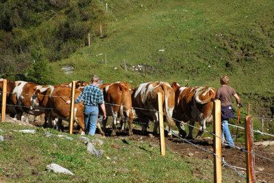 Österreich bietet verschiedene Arbeitsplätze an.