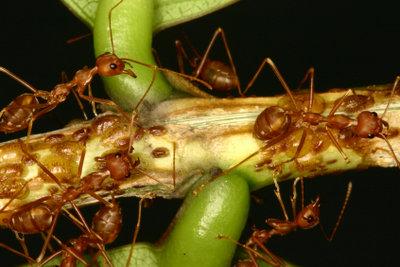 Ameisen sind nützliche Arbeitstiere.